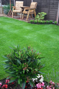 Image of a lawn created by Green Stripe Lawn Care, Milton Keynes