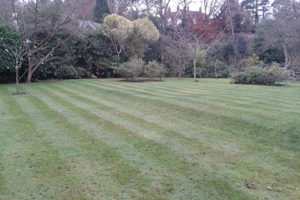 Image of a lawn that has been aerated using hollow tine aeration by Green Stripe, Milton Keynes