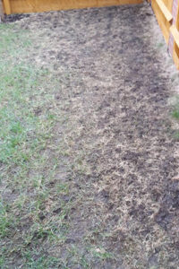 Image of a lawn severely damaged by leather jackets, before being treated by Green Stripe Lawn Care, Milton Keynes