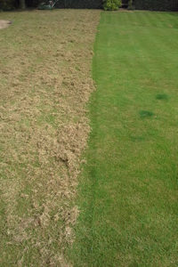 Image showing a lawn half of which has been scarified by Green Stripe Lawn Care, Milton Keynes to extract a large amount of dead material